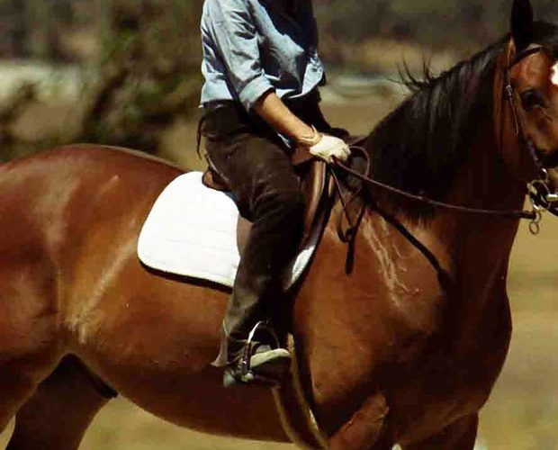 So, without further ado, here are some of our favourite celebrity horse…
